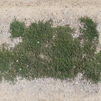 seamless groundplant
