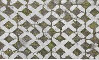 Photo Texture of Overgrown Floor