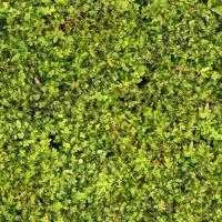 Seamless Grass 0001