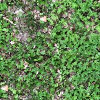 seamless groundplants