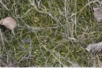 Photo Texture of Mossy 0004