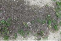 Photo Texture of Groundplants 0001