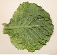 Photo Texture of Leaf Cabbage 0004