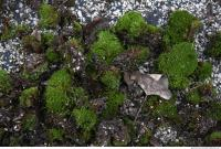 Photo Texture of Mossy 0003