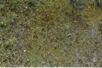 Photo Textures of Mossy 0001