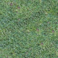 Photo High Resolution Seamless Grass Texture 0005