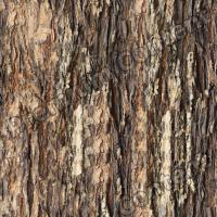 Photo High Resolution Seamless Tree Bark Texture 0003