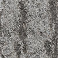 Photo High Resolution Seamless Tree Bark Texture 0007