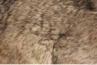 photo texture of fur 0001
