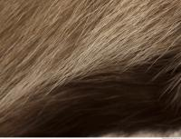 photo texture of fur 0010