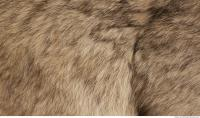photo texture of fur 0015