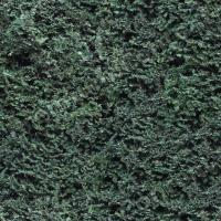 photo texture of hedge seamless 0001