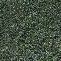 photo texture of hedge seamless 0003