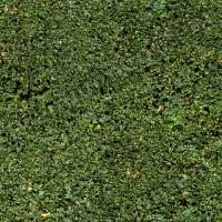 photo texture of hedge seamless 0005