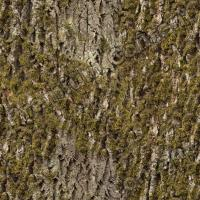 photo texture of tree bark seamless 0001