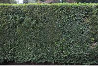 free photo texture of hedge