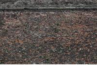 photo texture of wall brick overgrown 0007