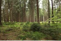 background forest 0014