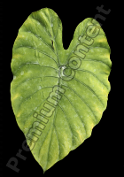 decal leaf 0003