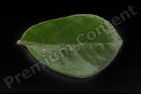 decal leaf 0001