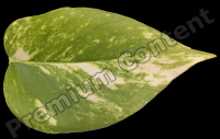 decal leaf 0011