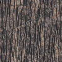 seamless tree bark 0004
