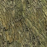 seamless tree bark 0005