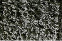 frozen hedge 0003