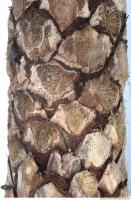 palm tree bark 0001