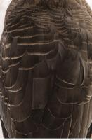feathers animal 0018