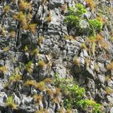 Cliffs Overgrown Rock
