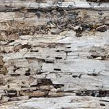 Decayed Wood
