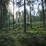 Background Forests