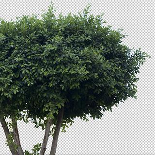 Plants Decals