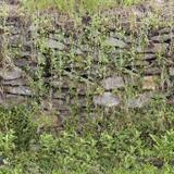 Seamless Hedge
